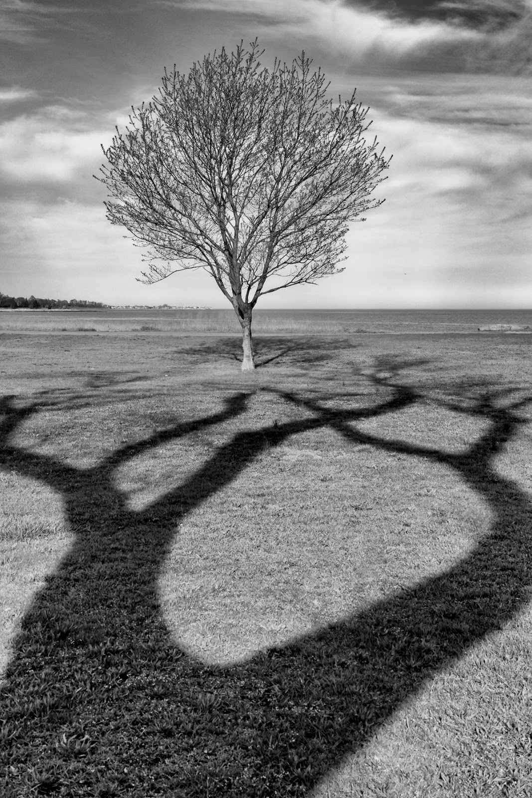 Tree Attraction  by  Laure Dunne