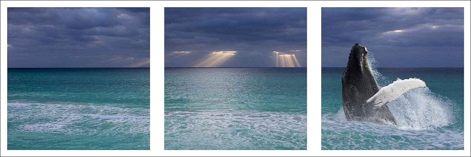 Cancun Sunrise  by  David Lindsay