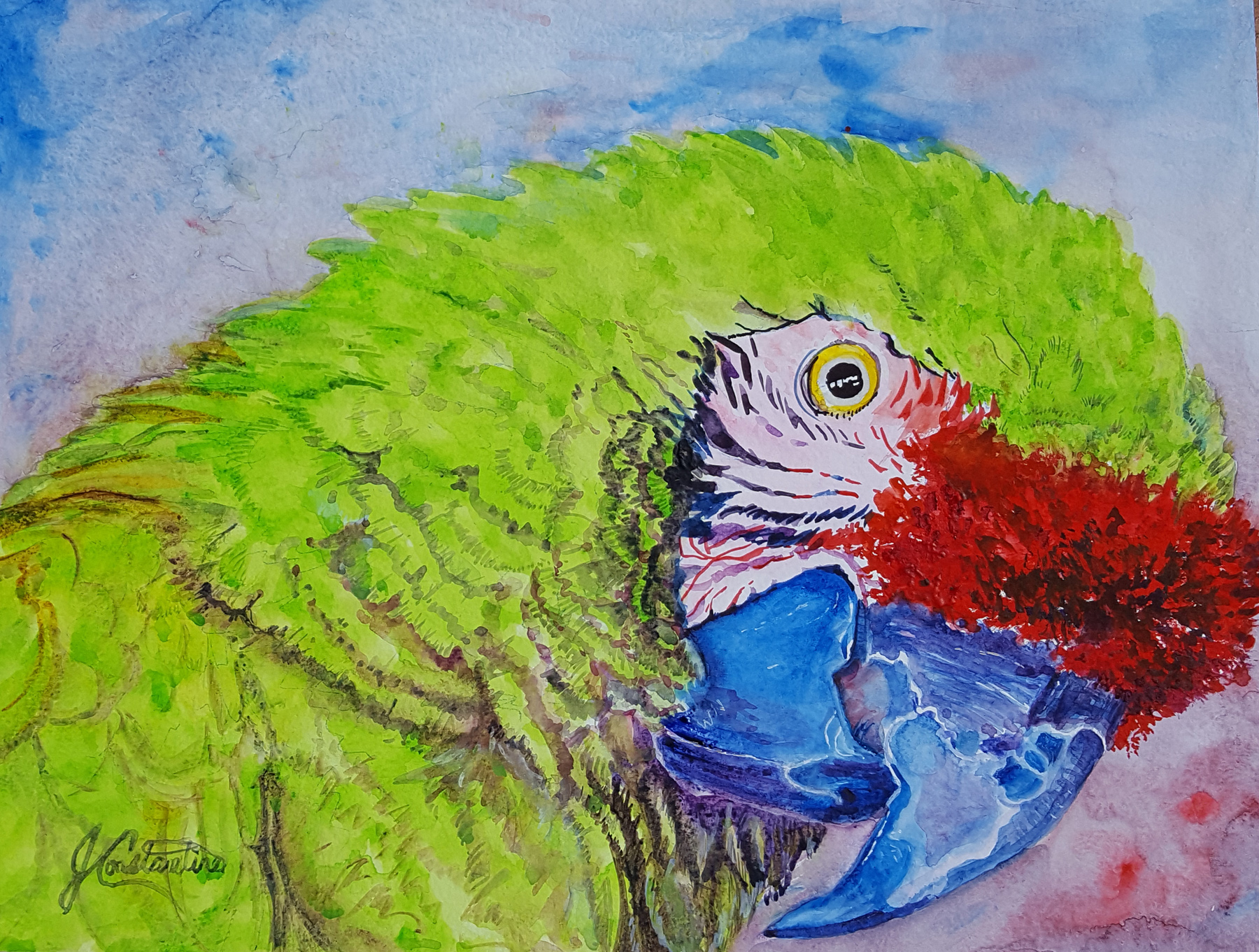 Military Macaw by  Judy Constantine - Masterpiece Online