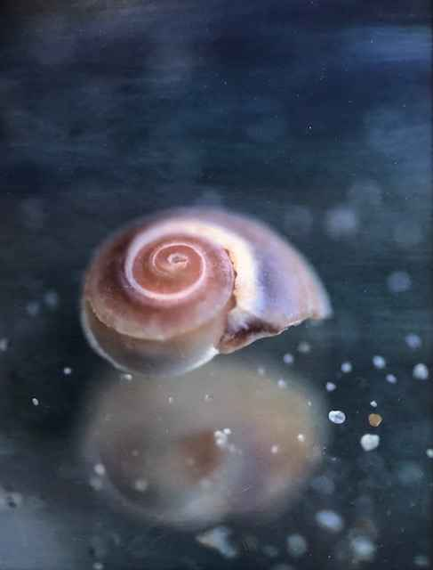 Shell Dream 3/250 by  Nancy Noble Gardner - Masterpiece Online