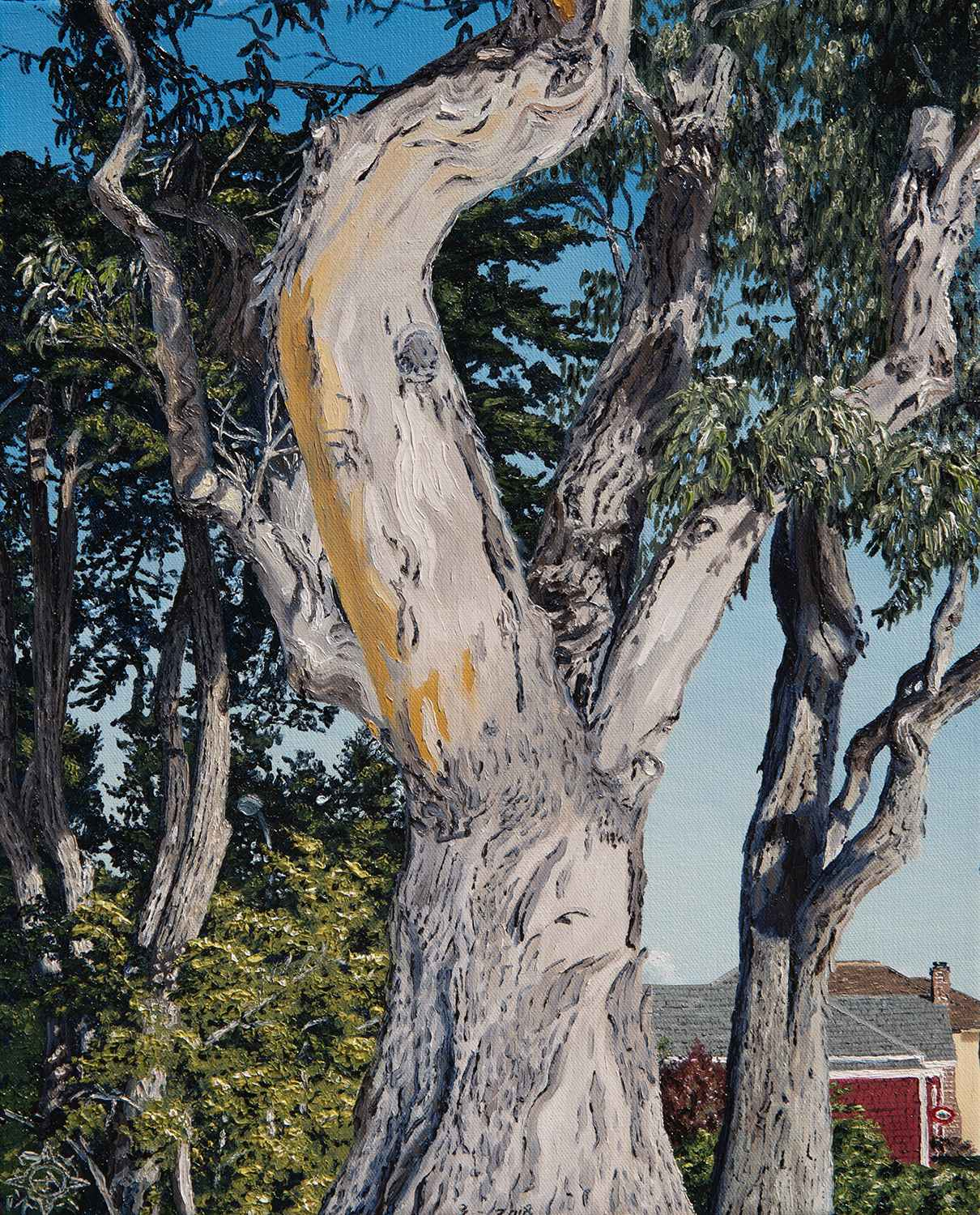 Eucalyptus, Pacific G... by  Tyler Abshier - Masterpiece Online