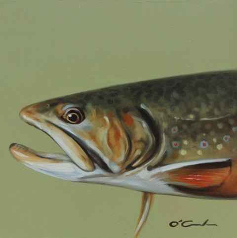 Brook Trout #2