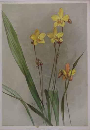 Reichenbachia: Spatho... by  H.G. Moon (1857-1905) - Masterpiece Online