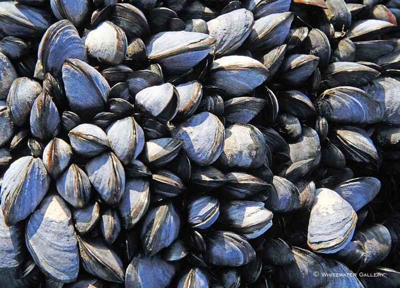 Mussels Tablemat by   Placemats & Coasters - Masterpiece Online