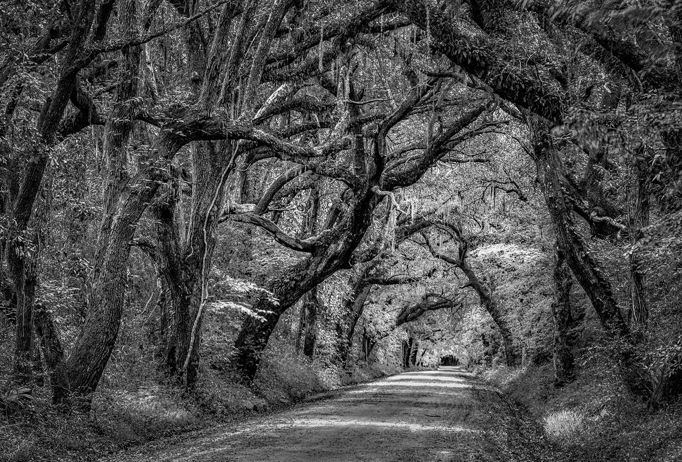 Covered Country Road by  Paul Hammesfahr - Masterpiece Online