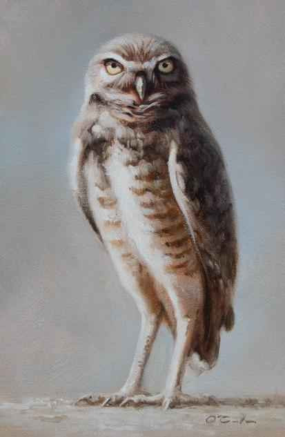 Burrowing Owl represented by  by  Jennifer O'Cualain