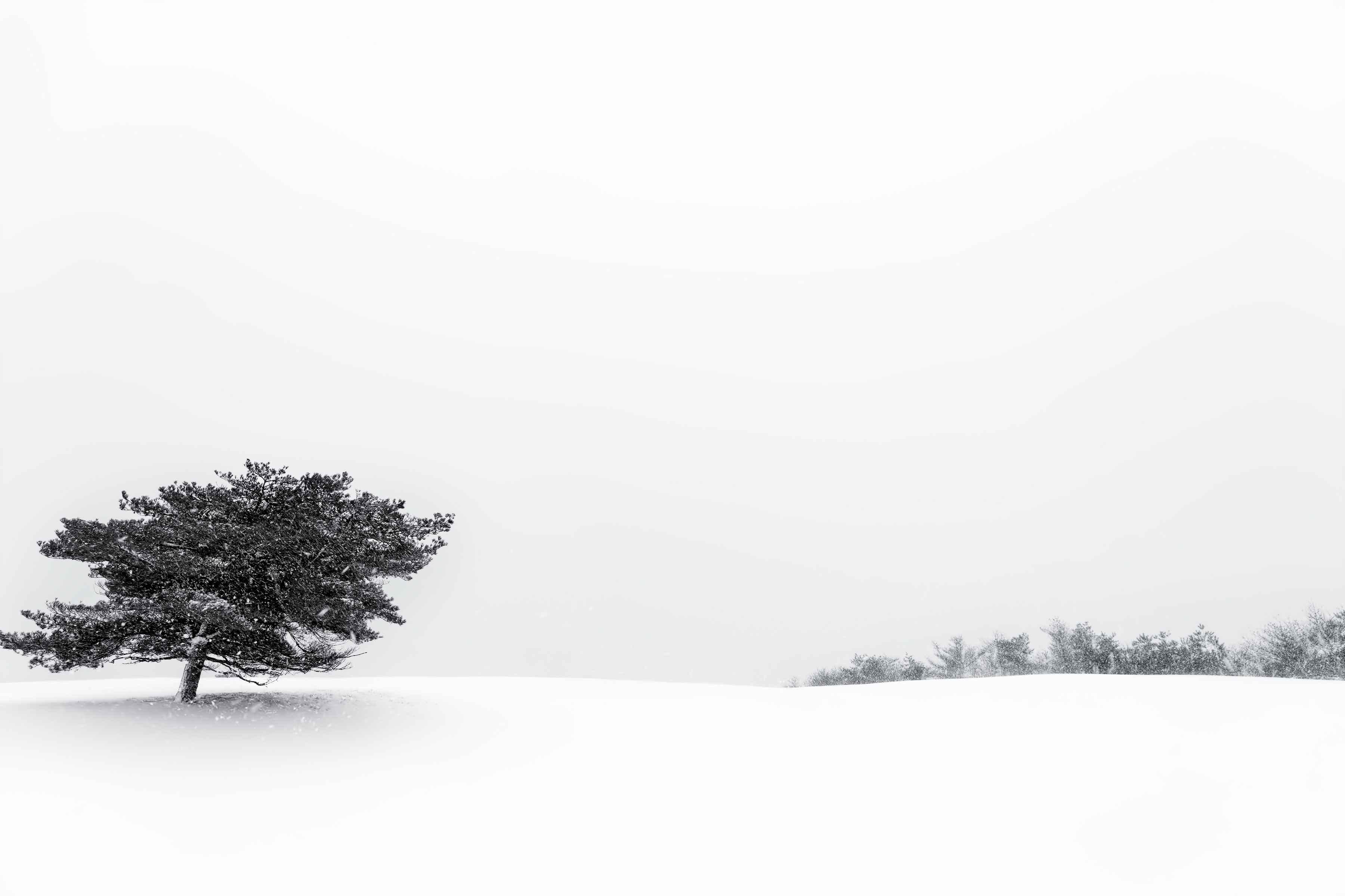 Winter Wind, Squibnoc... by  Michael Stimola - Masterpiece Online