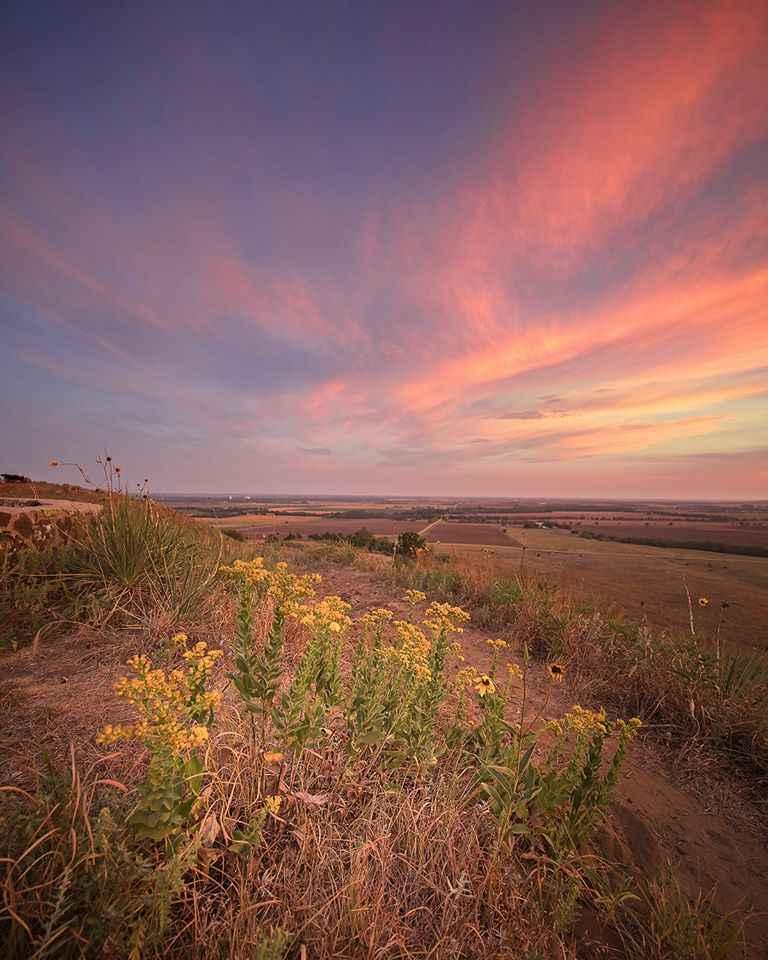 Sunflowers, Coronado ... by  George Jerkovich - Masterpiece Online