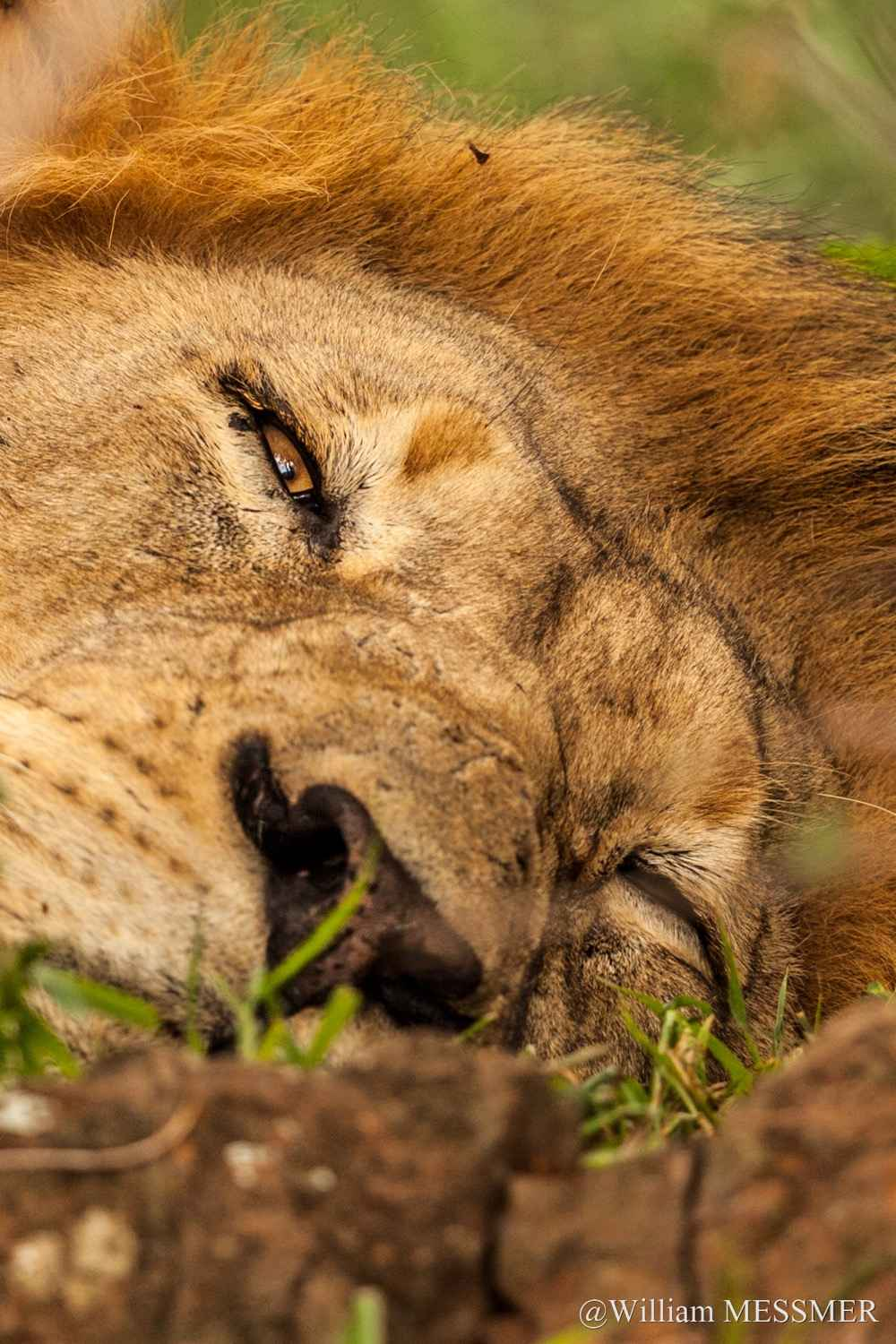 Africa: Relax by  William MESSMER - Masterpiece Online
