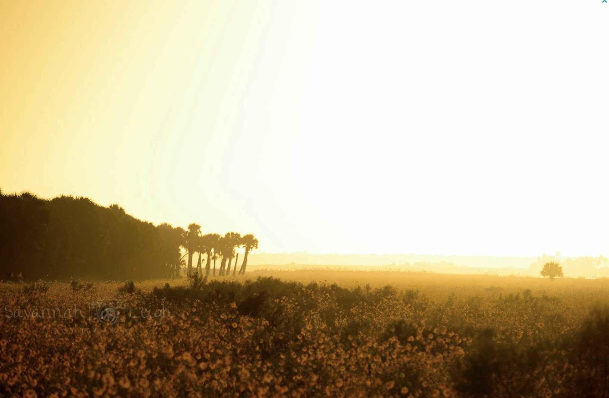 Sunshine & Wildflower... by  Savannah Leigh - Masterpiece Online
