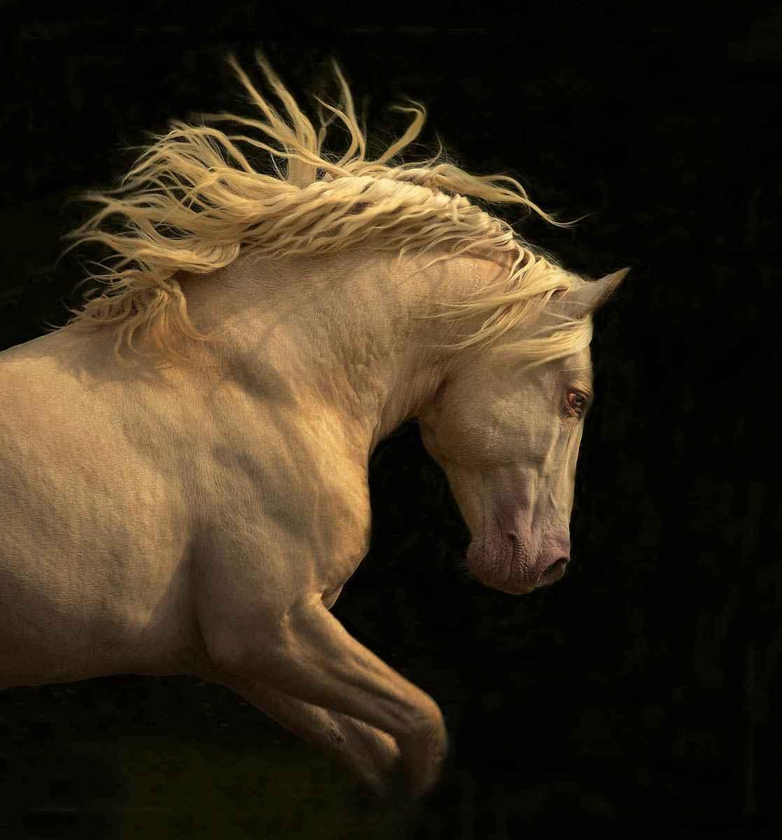 Kieto Profile by  Tony Stromberg - Masterpiece Online