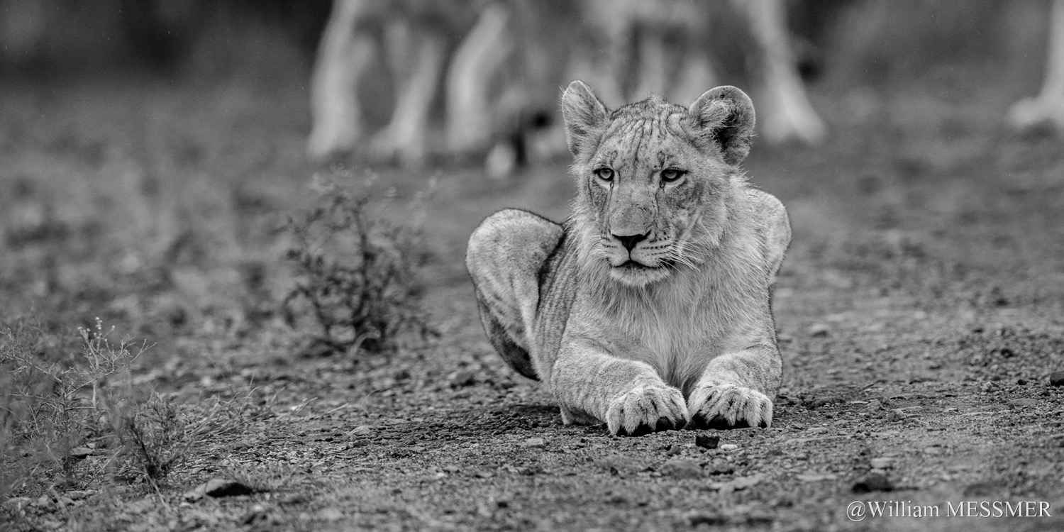 Africa: Une petite pa... by  William MESSMER - Masterpiece Online