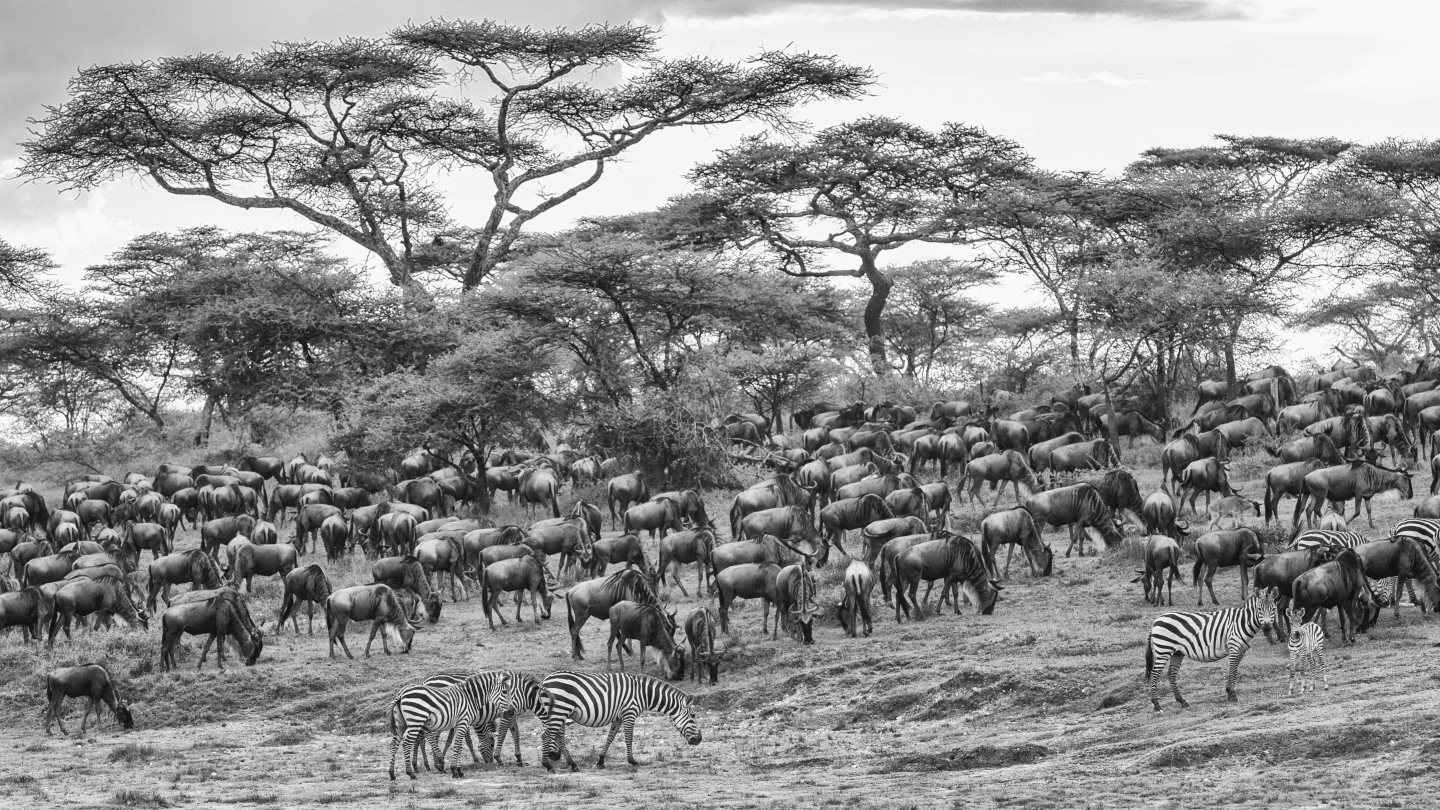 The Great Migration by  Xtina Parks - Masterpiece Online